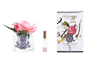 Роза Cote Noire French Rose Cherry Blossom Pink арт. GMR03